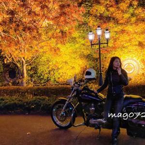 ハーレーで紅葉の夜