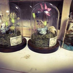 Petit jardinガラスドーム