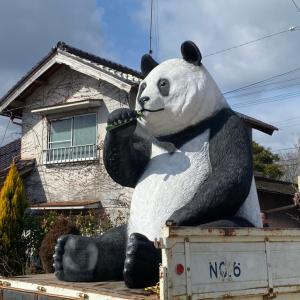 パンダがやってきた