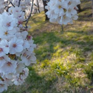【チャネリングルーンメッセージ】四月は『くつがえる』