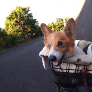 自転車んぽ