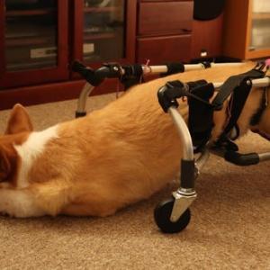 車いすで歩くジャッキー