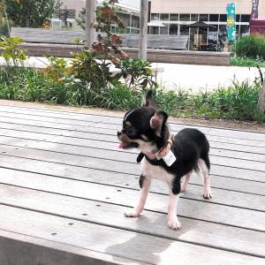 ずっと愛用したい、初めての愛犬お散歩グッズ!おしゃれで便利!