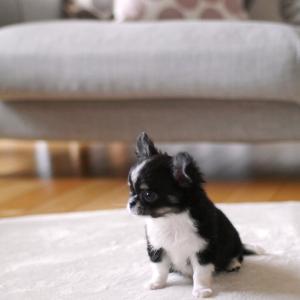 楽天マラソン追加ポチ!新しいリビングラグ&はじめての犬との暮らし