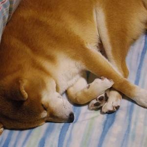 ばぁばの布団でネムネム寝