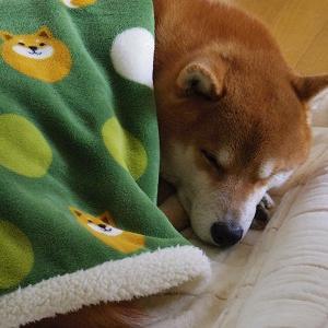 とーさんを待ってる寝