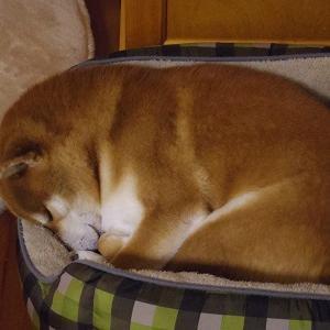 ちっちゃく丸まって寝