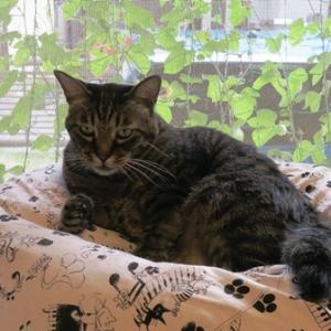 秋の気配と猫ベッド