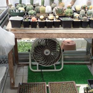 夏仕様の温室