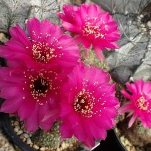 灼熱の温室内で咲く花たち