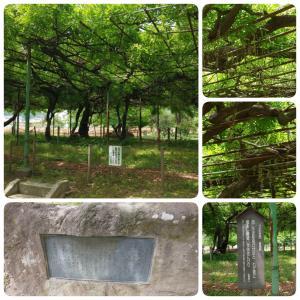 国分寺跡・万葉植物園(戸倉上山田一泊二日旅行)・・・その5