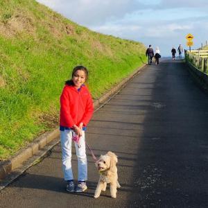 犬の散歩をする!