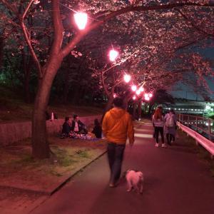 桜の季節終わっちゃうな