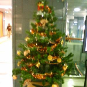 本日はクリスマスツリーの日です。