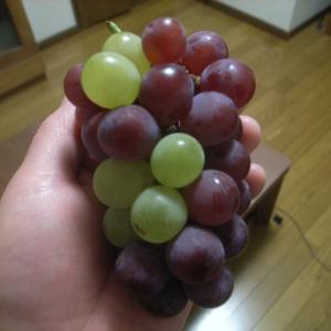 2色のブドウ