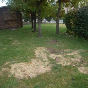 芝の植替え計画