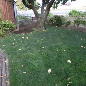 また芝を拡げる