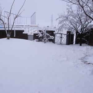 出勤前に雪かき