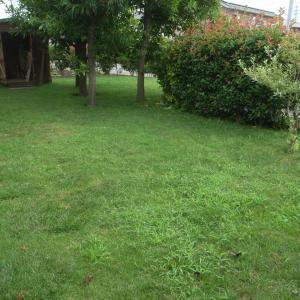 芝刈りより草とり