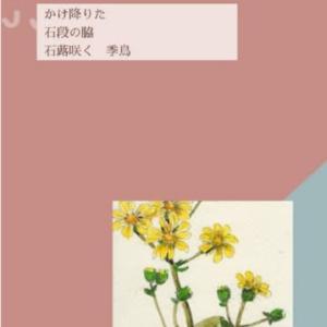 石蕗の花 俳句編