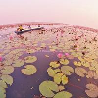タイ王国ウドーンターニー県の紅い睡蓮の海「タレー・ブア・デーン」(修正版)