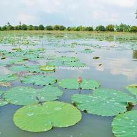 バンコクから日帰り可!ナコンパトム県のマハサワート運河ツアー(修正版)