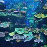 東南アジア最大の水族館「シーライフ・バンコク・オーシャンワールド(Sea Life Bangkok Ocean World)」