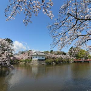 桜、小田原城-2020-