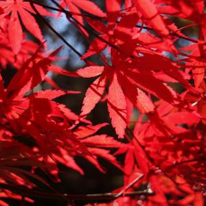 紅葉シーズン始まりです