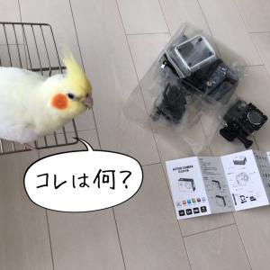 【「芸術の秋」再び・・と、動画撮影にチャレンジ?!】