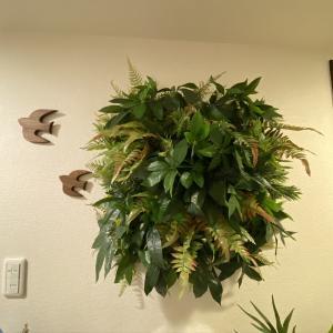 暗い玄関に緑が欲しい!!壁面緑化で模様替えにチャレンジ♪