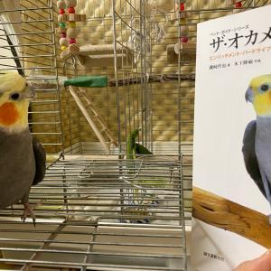 メルカリ初購入で10年越しの夢♪やっと手に入れた本に感動!!