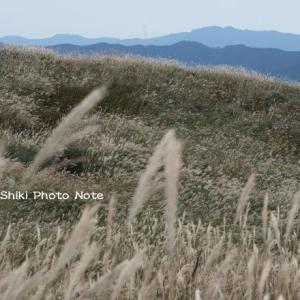 生石高原のススキ'19