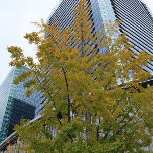 ビル街の秋