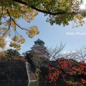 大阪城公園の赤色