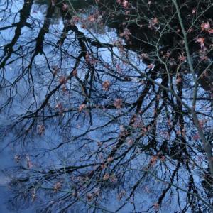 城公園の冬木立