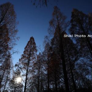 森林植物園の冬木立
