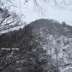 吉野の白雪
