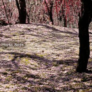 梅と椿の園
