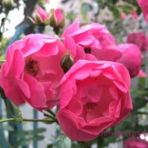 愛のみろくへの進化・愛のエロヒムのメッセージ