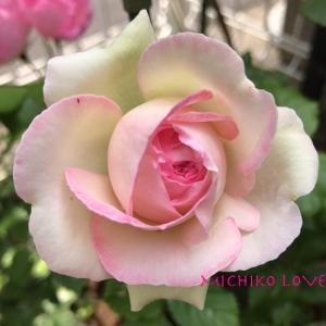 愛へと向かうあなたの進化・愛のエロヒムのメッセージ