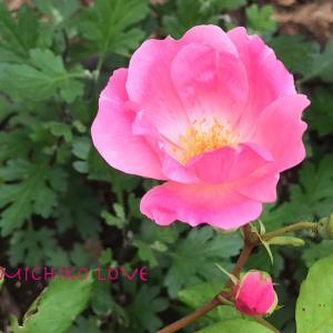 愛の喜びへ開くために・愛のエロヒムのメッセージ