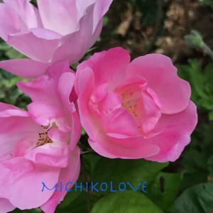 愛の進化への道・愛のエロヒムのメッセージ