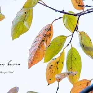 ちょっと秋