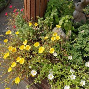 10月の庭の花