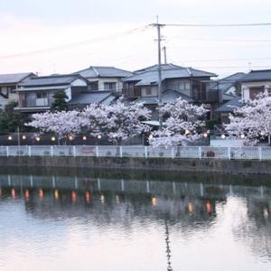桜も庭の花もいつものまま