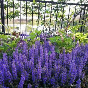 4月の庭(2)天使がいっぱい