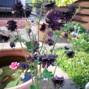 5月の庭の花