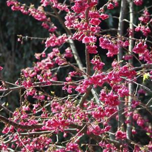 多良岳レインボーロード・平田通り路傍には、花桃が咲き誇り、春爛漫を誘っている。 の写真に、BGMをインサートし、動画にしました。  動画