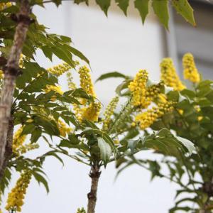 長崎街道小江通りの藤山医院では、チャリティーの花が花開き、初春の薫りを醸し出している。 の写真に、BGMをインサートし、動画にしました。  動画
